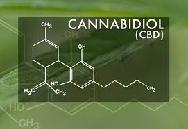 high cbd hemp clones
