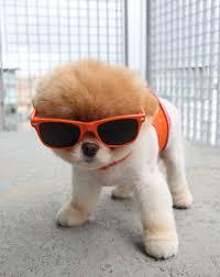 Image result for cool dog