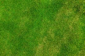 grass texture hd. Exellent Texture And Grass Texture Hd E