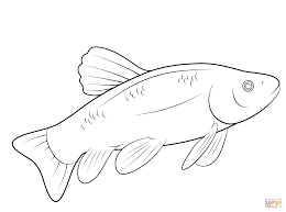Small Picture Fish coloring page Free Printable Coloring Pages