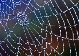 Image result for pictures of spider webs