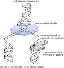 Evolution Springerlink
