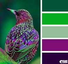 Purple Green Chameleon Color Palette Color Palettes Color