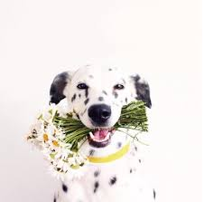 natural remes for dogs with bad breath