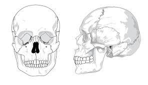 Small Picture Human Skull No Text No Color Clip Art at Clkercom vector clip