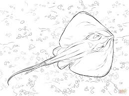 Small Picture Common Stingray coloring page Free Printable Coloring Pages