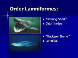 "class chondrichthyes ""cartilaginous fish"" kingdom ani a ppt  32 order"