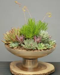 succulent garden sf701