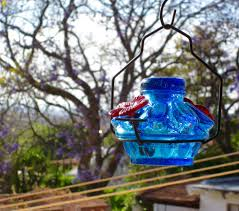 instead then i decided to a feeder to hang out on my patio a lovely blue glass hummingbird feeder at a local specialty called camino