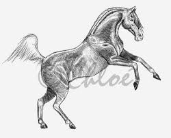 rearing horses drawings. Perfect Rearing Rearing Horse Drawing  By Chlo Intended Horses Drawings