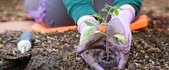 garden planting. you can also decorate the garden with recycle material. simply take a plastic bottle and cut it down from center put soil in until is full than planting d
