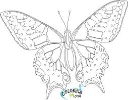 Free Printable Butterfly Colouring Pictures Butterfly Coloring Page