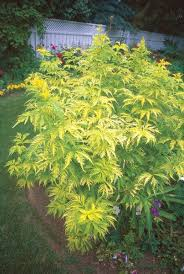Small Picture Beautiful Foliage Plants for Your Perennial Garden Gallery