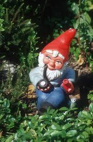 every garden needs a gnome right