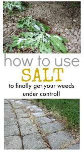did you know that you can effectively use salt to kill weeds these tips will help you do it properly and with amazing results