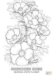Small Picture Georgia State Flower coloring page Free Printable Coloring Pages