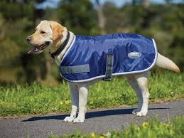 wb windbreaker 420 dog coat