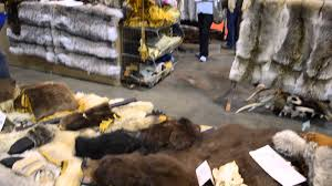 wolf rug bear rug real fur coats and hats at sportman s expo denver you