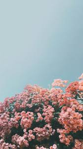 Flower iphone wallpaper, Iphone ...