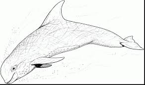 Small Picture Coloring Pages Whales Free Dolphin Coloring Pages Coloring Pages