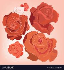 roses image vector image