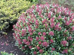 Plants For The Shade Shade Loving Plants London UKClimbing Plants That Like Shade