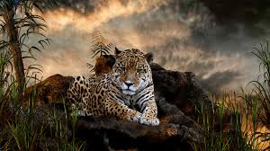 full hd animal wallpapers. Interesting Full 5677797 Wild Animals Images Ed Jelley To Full Hd Animal Wallpapers