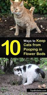keep cats from ing in flower beds