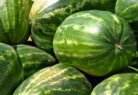 How To Grow Watermelon Organically Planet Natural