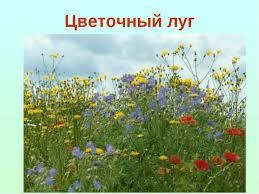 Презентация Луг природное сообщество класс скачать бесплатно Луг природное сообщество Цветочный луг