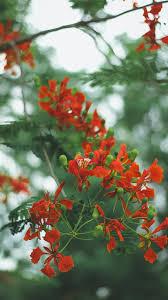 green, flower, kerala, beauty, plant ...