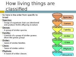 Taxonomy Biology By M Frajman Teachers Pay Teachers