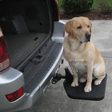 Dog Car Ramp Solutions & Info