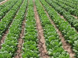 Resultado de imagen para agricultura ecologica
