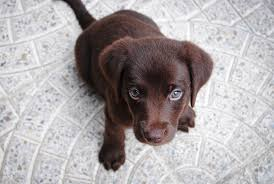 20 Cute Dog Love Quotes Puppy Sayings And Best Friend Picture