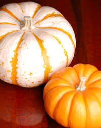 Lesson Plans for First Grade Science   Education besides  in addition  moreover Measurement Worksheets   Education as well 4 Year Old Worksheets Printable   Activity Shelter   Kids besides Lesson Plan For Kindergarten Science   Elipalteco additionally Learn the Bone Zone  Skull   Life science  Worksheets and Learning additionally Lesson Plans for First Grade Science   Education besides  as well The 25  best Halloween writing prompts ideas on Pinterest moreover Science Worksheets   Have Fun Teaching. on kindergarten halloween worksheets for sci