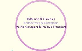 Venn Diagram Of Diffusion Osmosis And Active Transport Diffusion Osmosis Exocytosis Endocytosis Active
