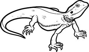 Small Picture Lizard Coloring Pages Lizards 2 Pagepngctok20120221195146 Coloring