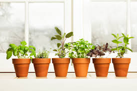 Kitchen Herb Garden Indoor Fresh Kitchen Herbs To Grow Homesfeed