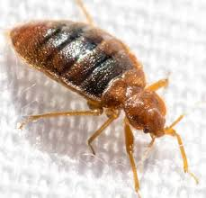 warning signs of bed bugs