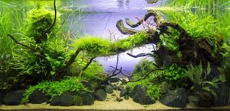 Aquascape Designs San Francisco Planted Tank Old River By Sven Pohle Aquascape Awards