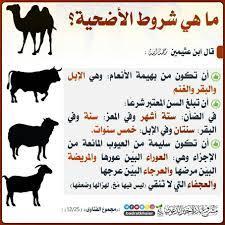 🌳شروط الاضحية🌳 الشيخ ابن باز... - الدال على الخير كفاعله