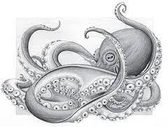 Small Picture Image result for realistic octopus drawing Tattoos Pinterest