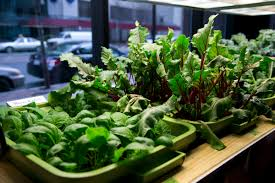 Small Picture Indoor vegetable garden design ideas