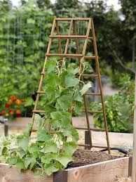Kitchen Gardening Tips Kitchen Garden Trellis Wood A Frame Trellis Gardeners Supply