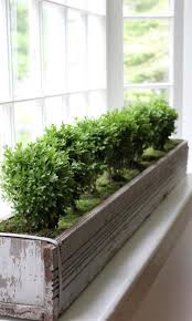 Image Diy Miniature Boxwood Tree Planter Interior Window Box Pinterest Miniature Boxwood Tree Planter Interior Window Box Plant Stands
