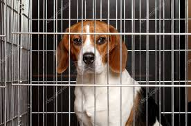 dog in a cage stock photo image by