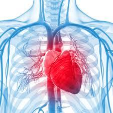 الازمة القلبية الصامتة وطريقة الوقاية منها | المرسال