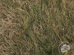 wild grass texture. Hay, Bushes, Grass, Dried Hay Wild Grass Texture School Photo Project