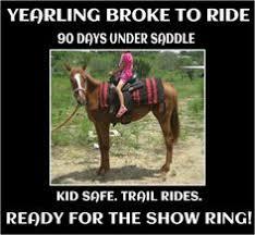 Horse MEMES on Pinterest | Meme, Horses and Horse Meme via Relatably.com